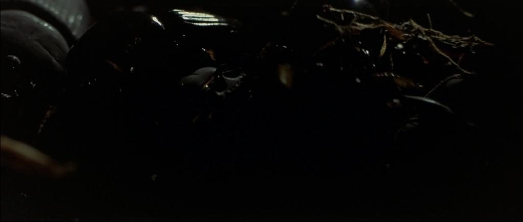 Scène d'ouverture de Blue Velvet