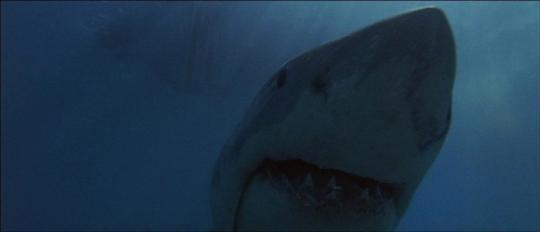 "Un authentique requin dans ""Les Dents de la mer"""