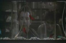 Analyse de scène : Mickey Rourke et Matt Dillon dans «Rusty James»